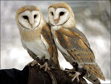 owl superstition Whether they are old wives tales, urban legends, or just scary stories these are the 25 strangest superstitions from around the world.